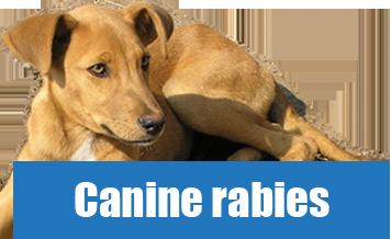 Canine Rabies